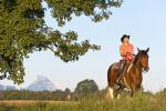 12_Pferdeland_Nationalpark_Kalkalpen.jpeg